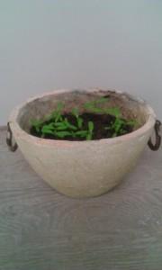plantjes zaaien