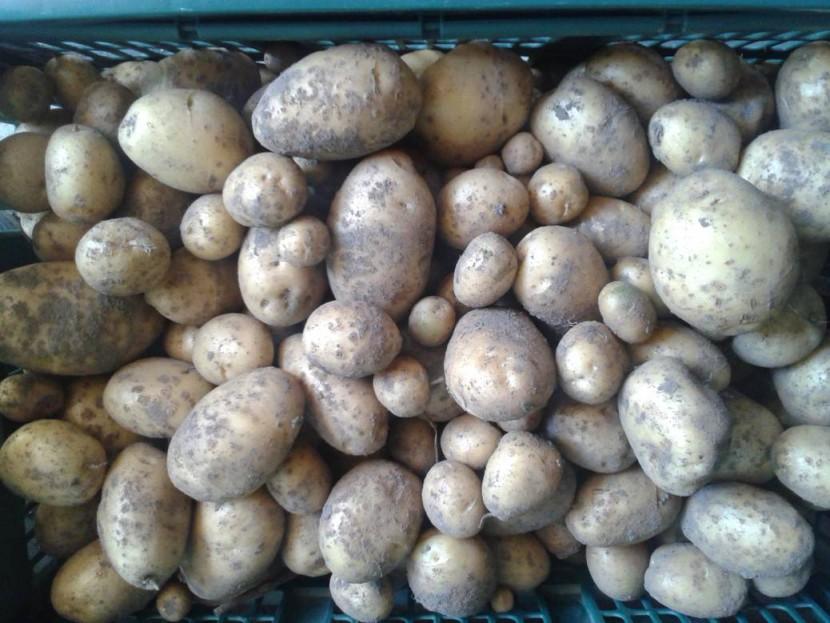 Je eigen aardappelen telen: ook met weinig plaats