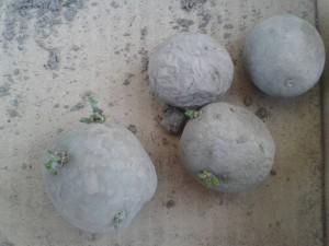 aardappelen_poot_1038px