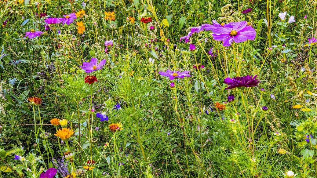 Zaai eens een bloemenweide